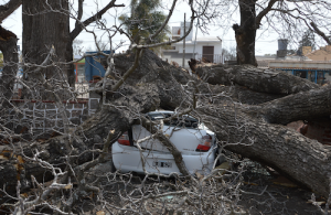 Argentina car crushed by tree